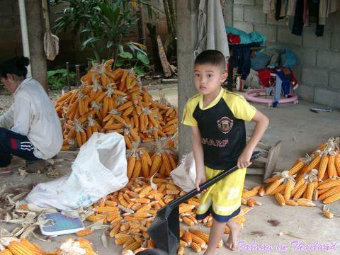 Thailändischer Junge zur Reisernte
