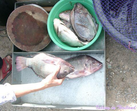 Thailändischer Markt - Fisch