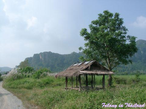 Strohhütte im Reisfeld Thailand
