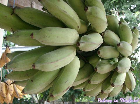 Bananenstaude - Thailand