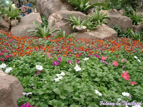 Blumen und Steine - Blumenschau Chiang Rai