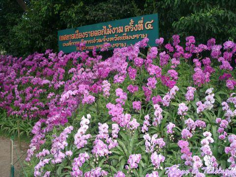 Blumenausstellung Chiang Rai