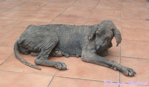 Faltenhund