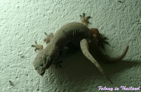 grüner porno zwischen geckos