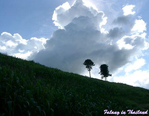 Wolken über dem Maisfeld